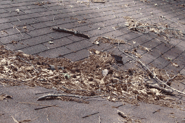 Pine Needles And Leaves Are Bad For Roofs